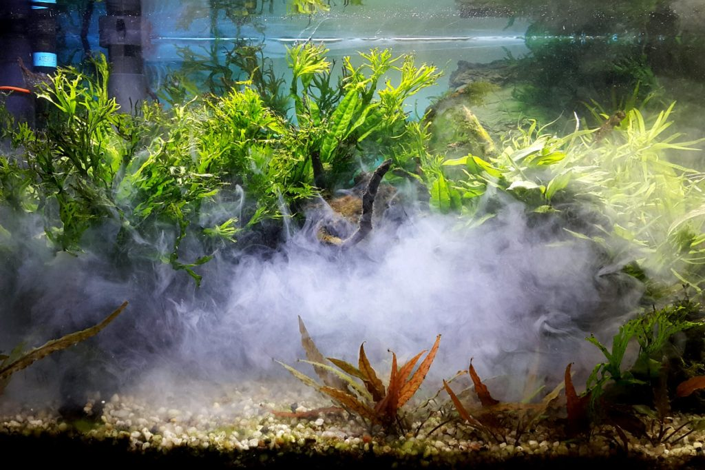The Best Aquarium Lighting For Plants Available Today!
