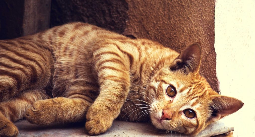 Healthy cat food for kidney disease.