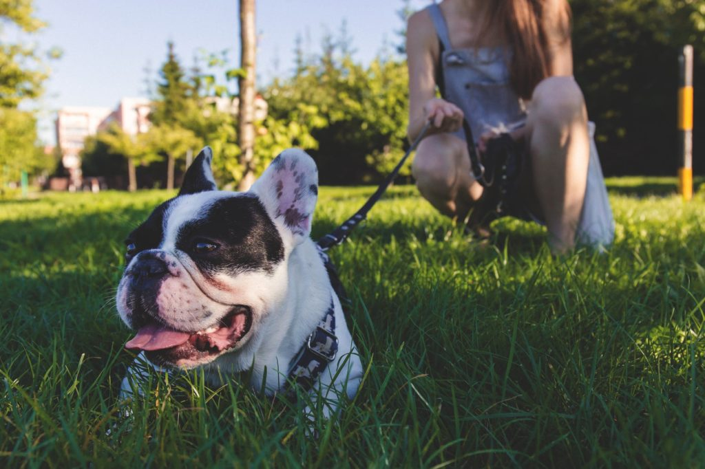 The Best Dog Food For French Bulldogs On The Market!