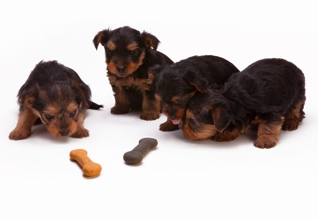 The Best Puppy Chew Toys For Teething!