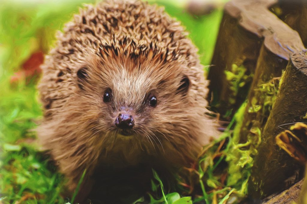 The Best Cat Food For Hedgehogs.
