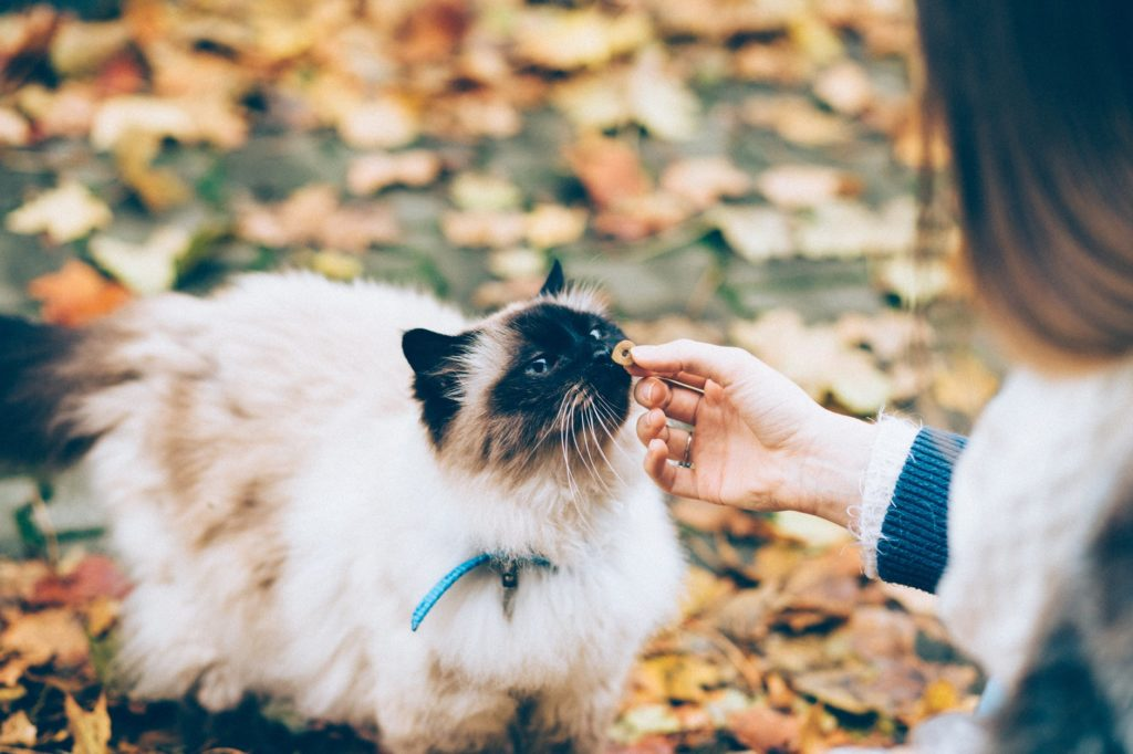Getting Your Cat To Wear A Collar!