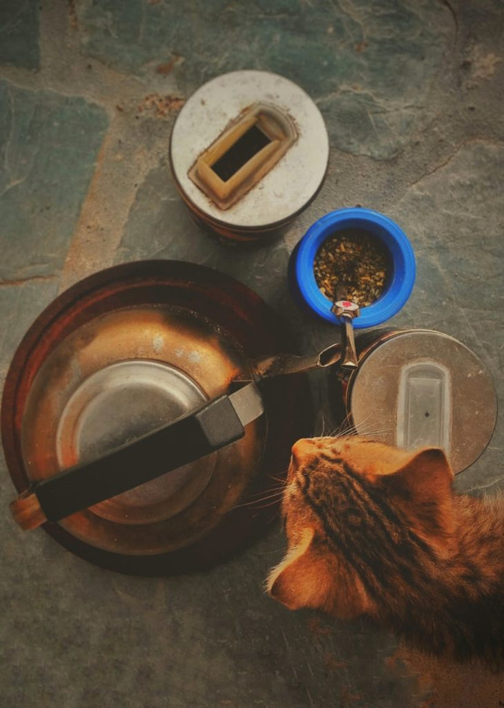 Can a cat be healthy on a vegan diet?