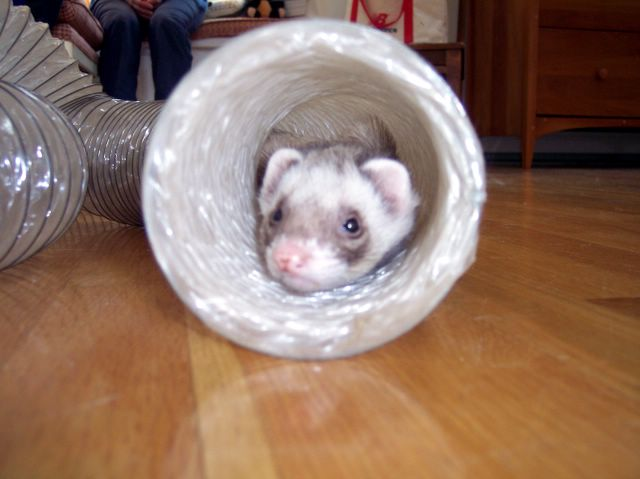 How To Make A Ferret Tunnel! – A Home