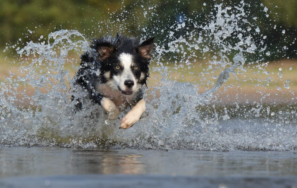 Get your dog swimming.