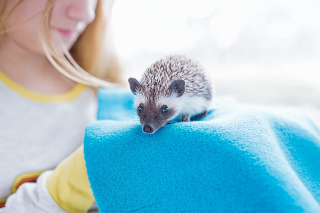 Get Your Hedgehog To Eat Mealworms.