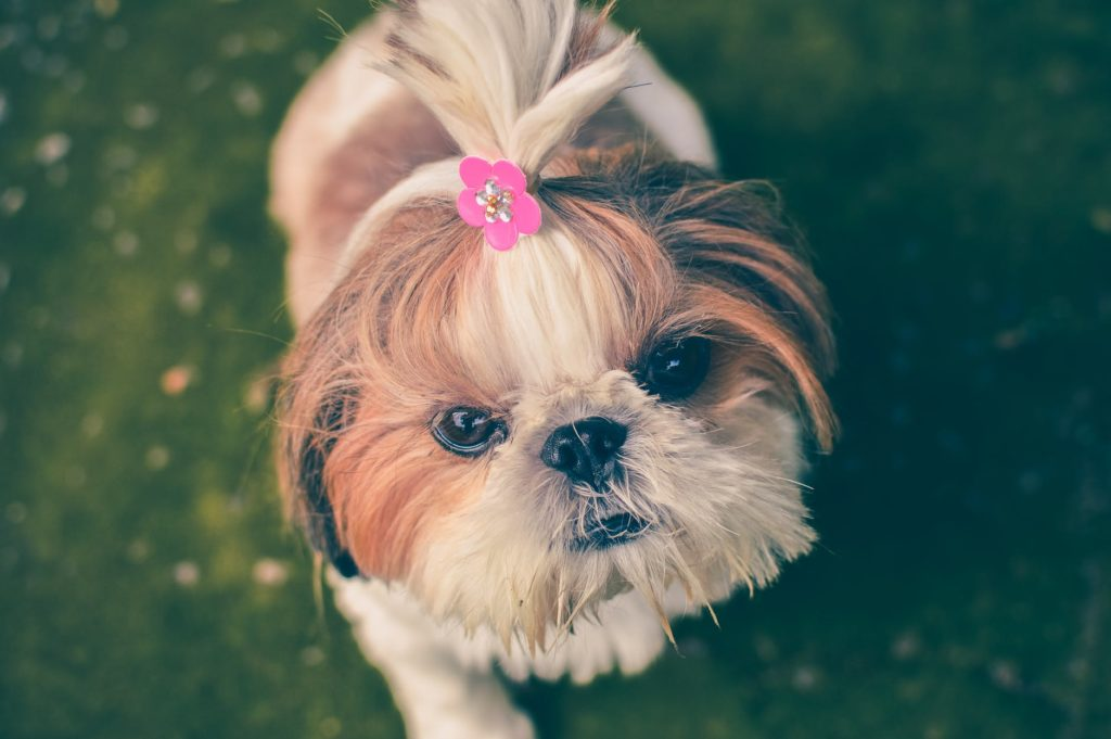 How To Get Rid Of Dog Dandruff Quickly Via Grooming.